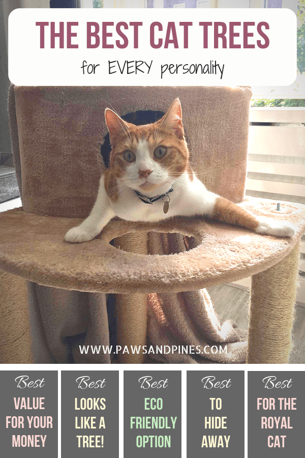 Large cat tree with text overlay: the best cat tree for every personality