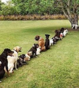 pet services - dog training
