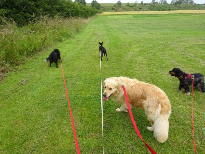 PARPS Pack Walks