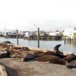 Visiting Crescent City California: Seals, Sea Lions and a Lighthouse… oh my!