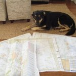 How To Plan A Vacation The Paws For Beer Way