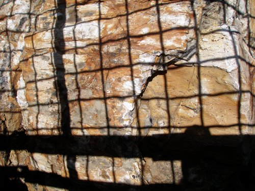 the high sun ruining our photos of the petrified wood