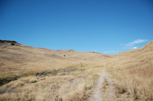 The trail gets narrower as you walk the battlefield grounds at Whitebird