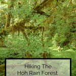 Hikes In The Hoh Rain Forest Olympic National Park