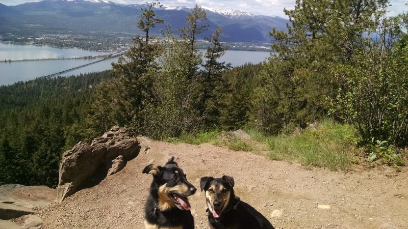 Dog-Friendly Hikes In North Idaho You And Your Dog Should Do Part 1 -