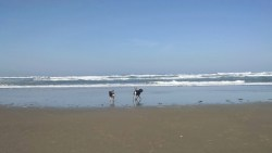 First Time Camping With Dogs: Beachside State Recreation Site