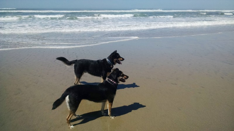 Dog-Friendly Check List For Newport Oregon