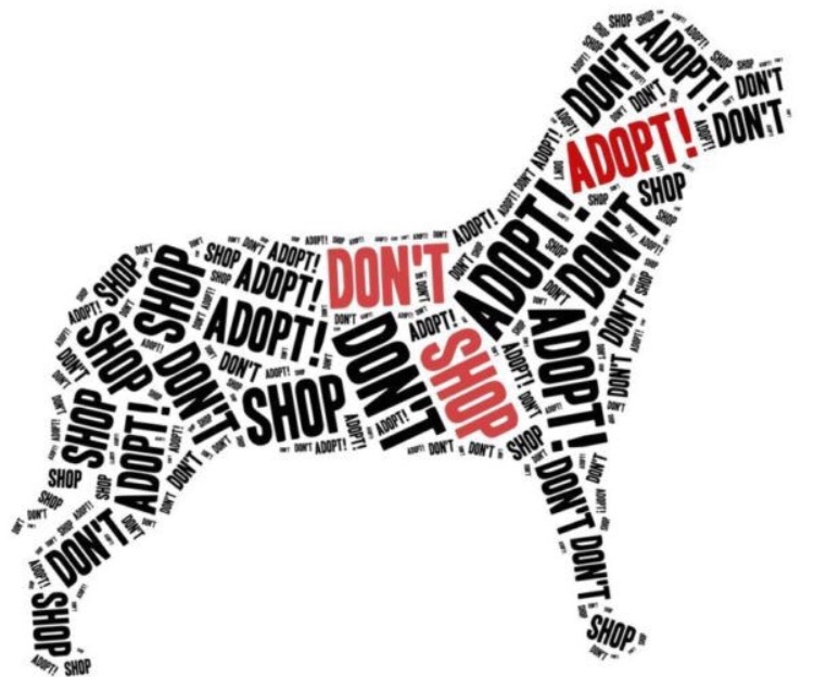 Adoption Central Paws Give Me Purpose