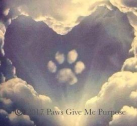 Paws Give Me Purpose