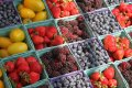PayCargo Capital credit facility helps keep fresh produce supply chain moving