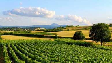 visite les vignes en vacances