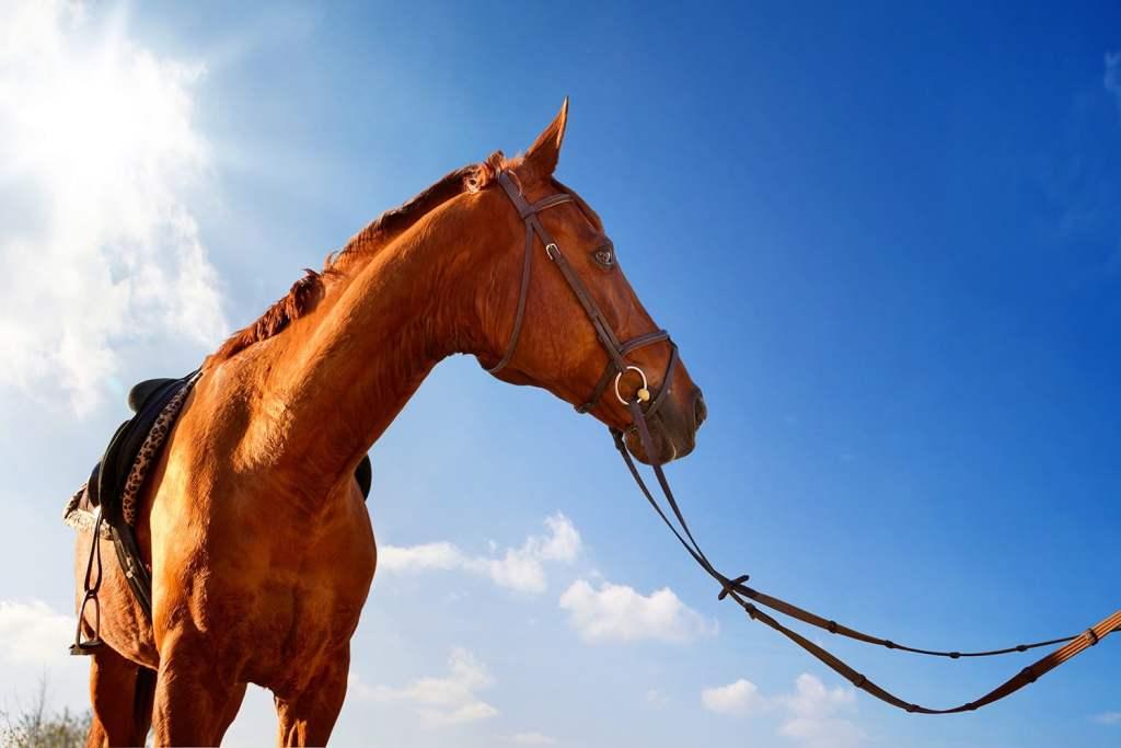 Equitation_chevaux_pays_basque
