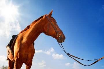 Equitation-chevaux-au-pays-basque