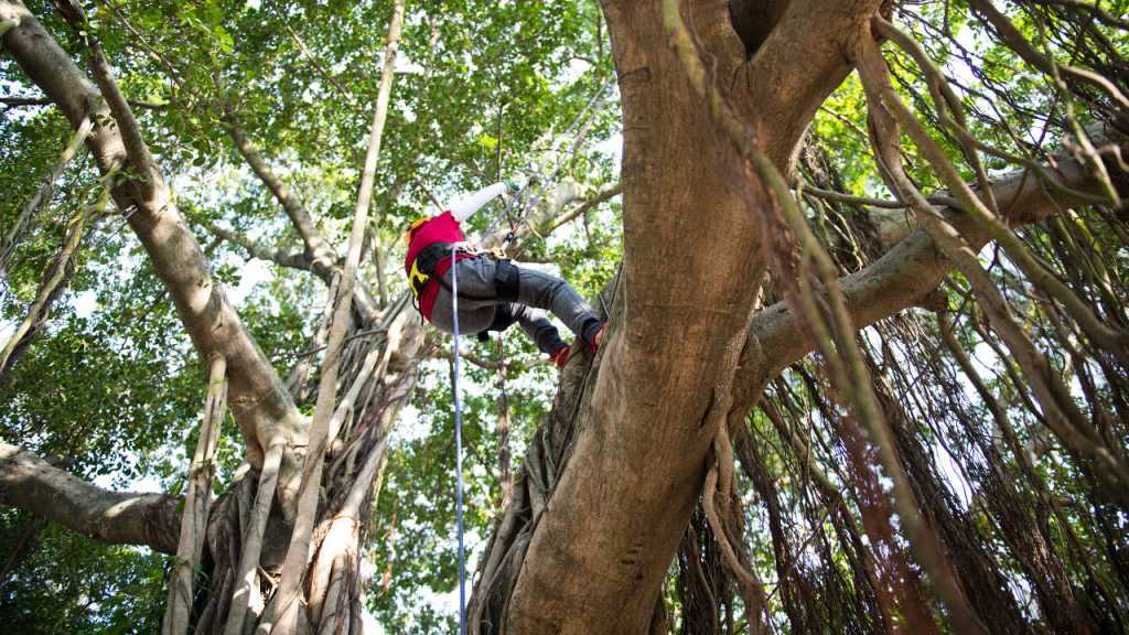 Parc_aventure_pays_basque_dans_les_arbres