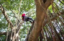 Parc_aventure_pays_basque_dans_les_arbres-pays-basque