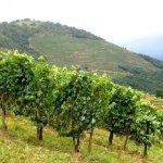bouts-terrasses-et-arradoy-pays-basque