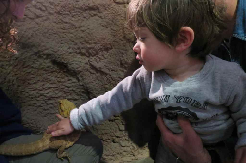 museedelascience-donostia-eureka-animalia