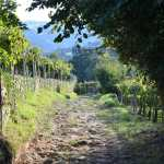 le-txakoli-de-zarautz-vin-blanc-pays-basque-pais-vasco-vignes