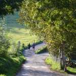 le-mont-adarra-balade-randonnee-pays-basque-chemin