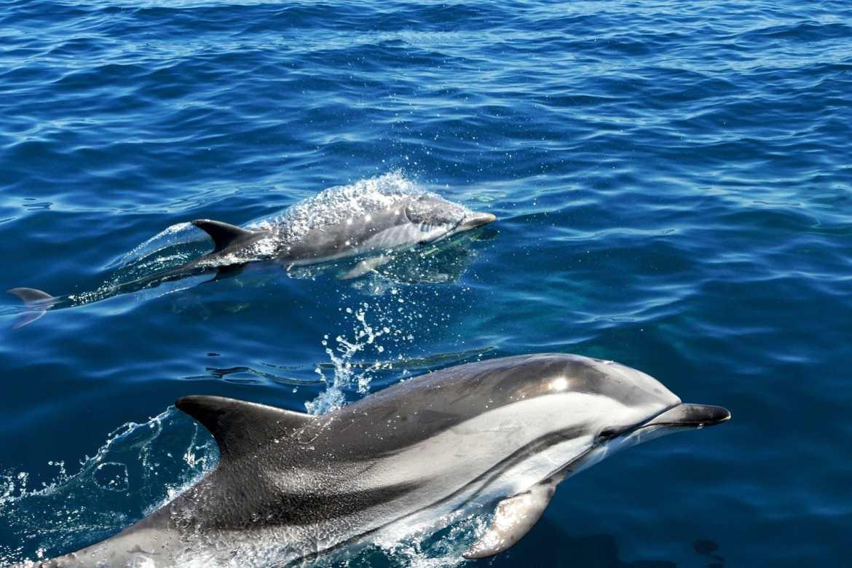 catamaran-atalaya-explore-ocean-pays-basque-hendaye-saint-jean-de-luz-dauphins