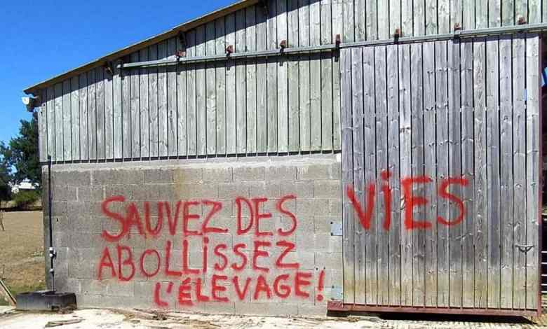 intrusions-et-graffiti-sur-des-batiments-delevage