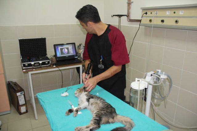 Картинки по запросу hayvan hastanesi