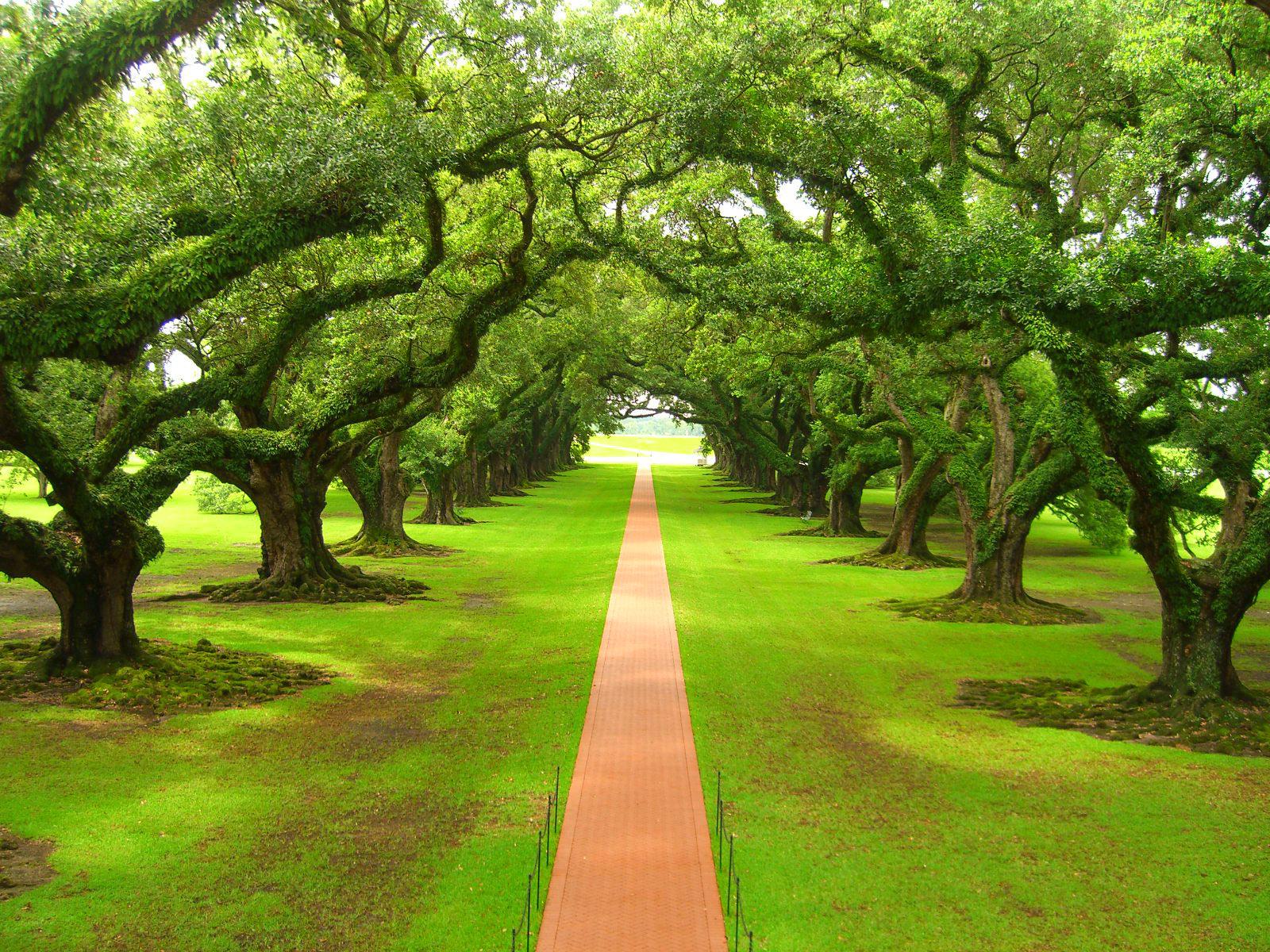 imagenesdepaisajespaisajes1jpg Paz de Selva Verde