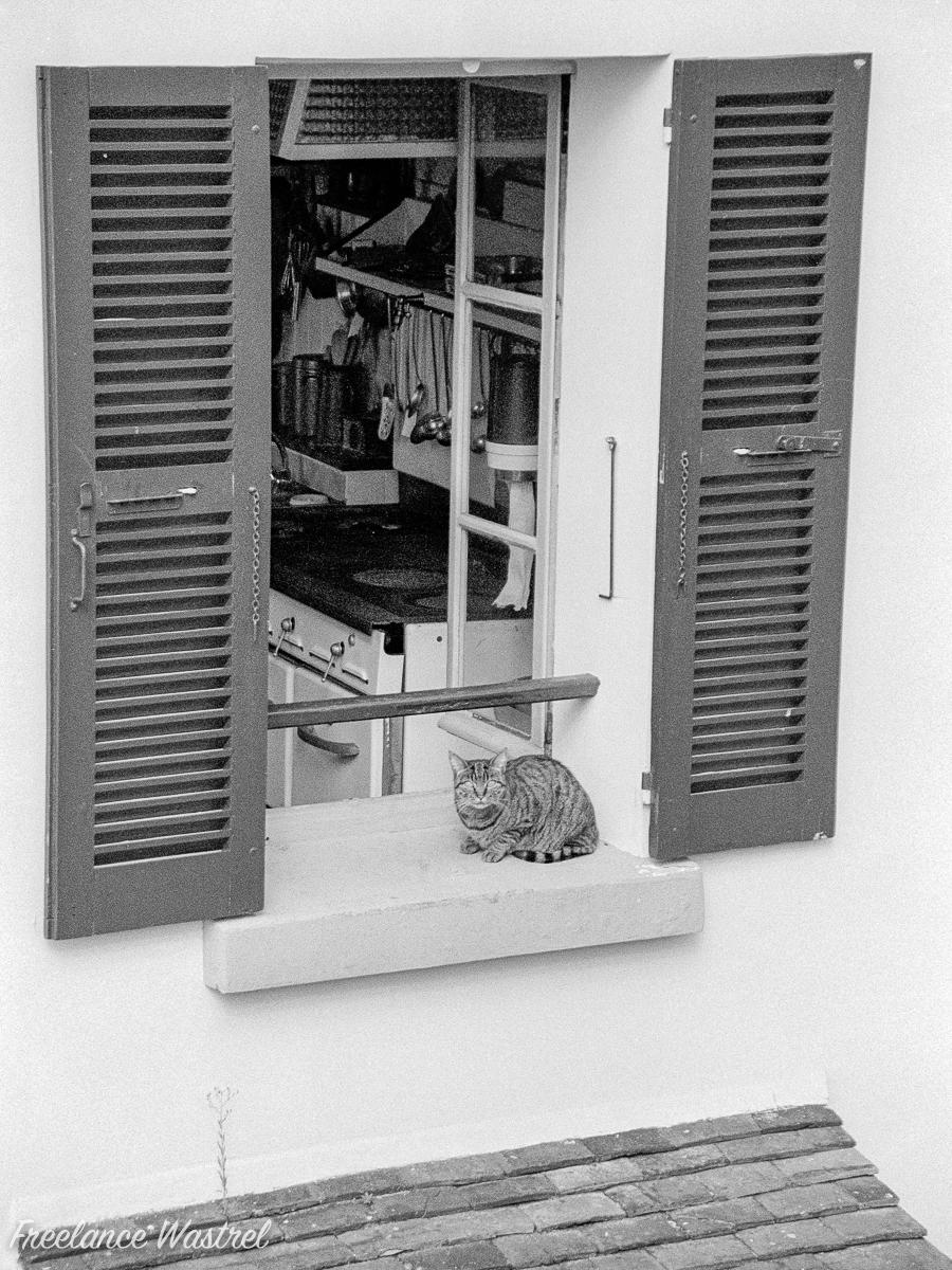 Cat on a window sill, Paris, September 2000