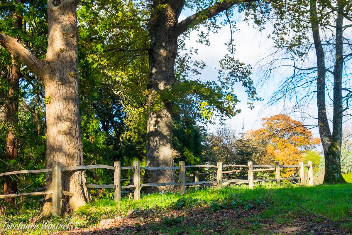 Woodland, Wakehurst Place, West Sussex