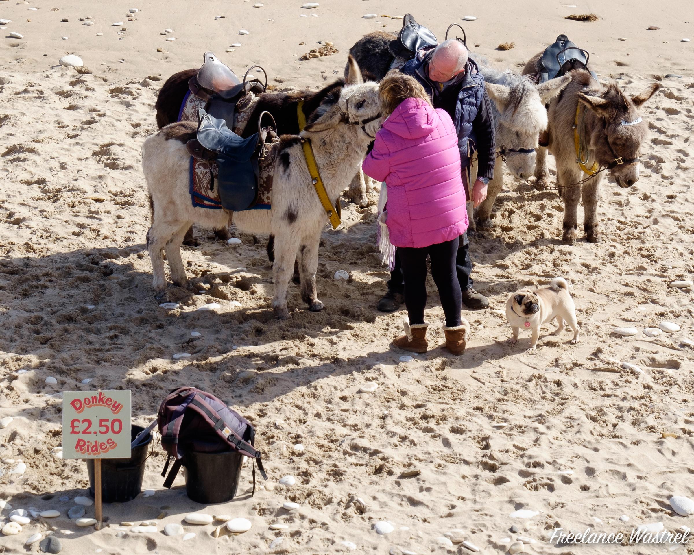 Donkey Rides £2.50