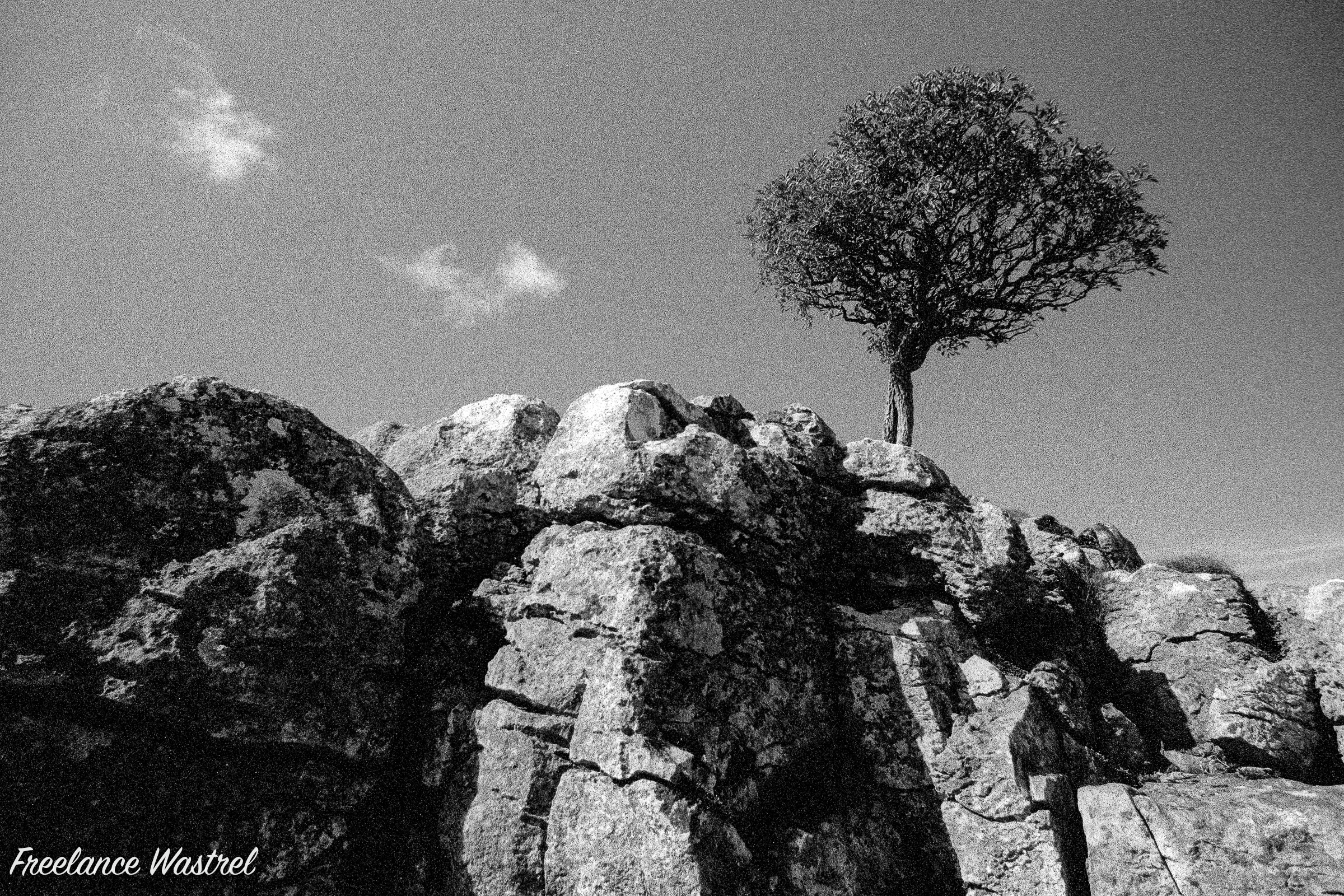 Lone tree, North Yorkshire-19970917b