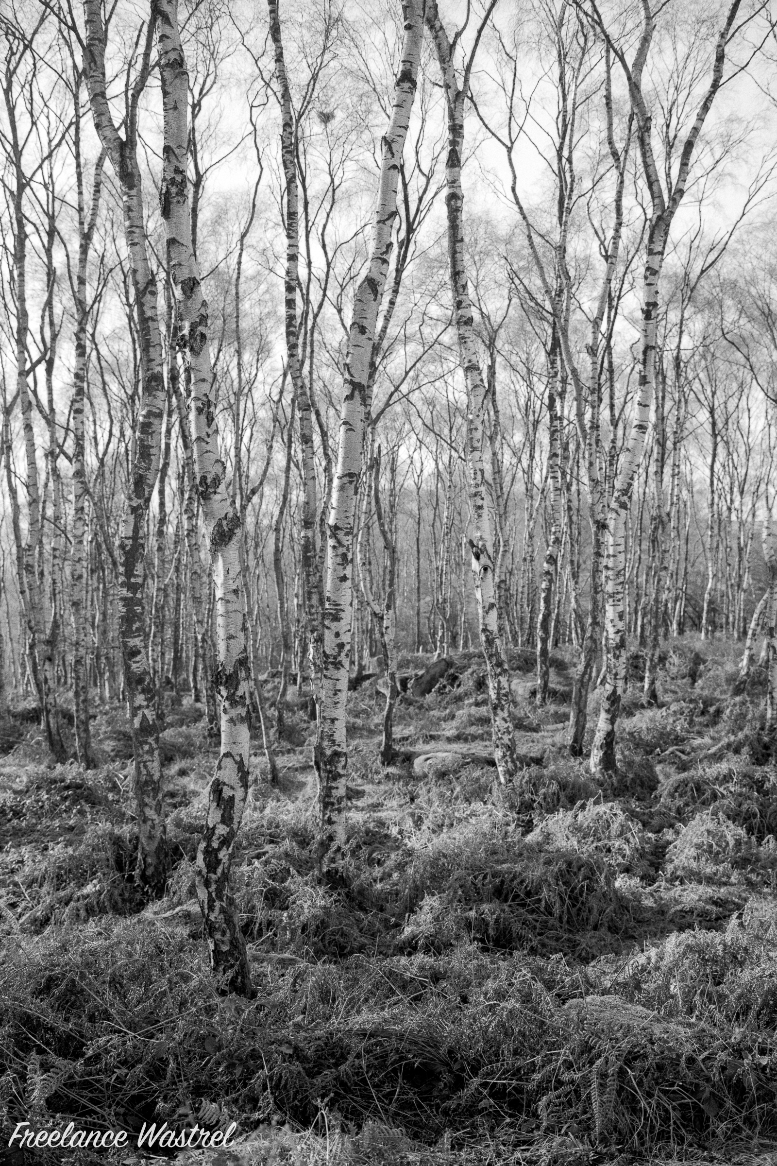 Silver Birches, Jack Flat, January 2020