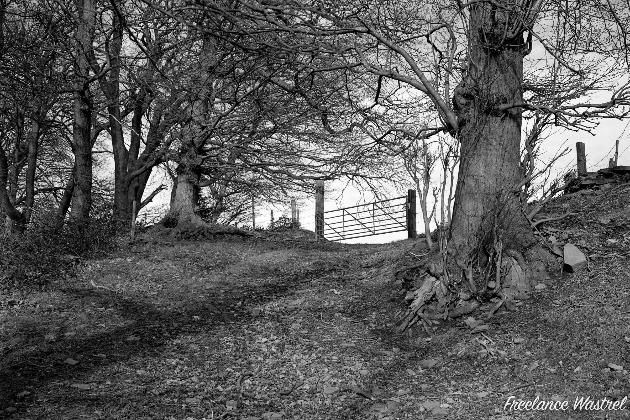 Green Wood, February 2020