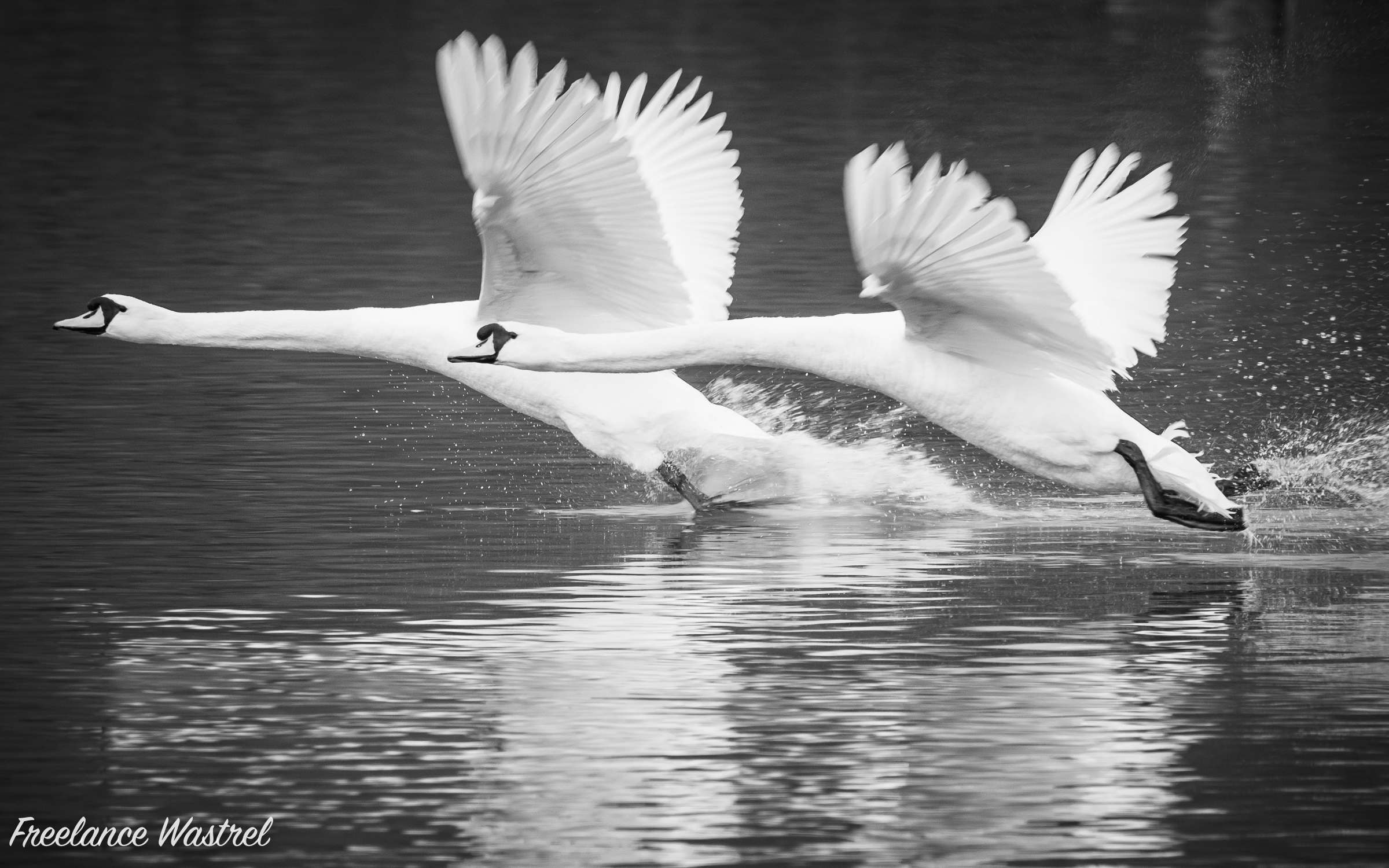 Taking flight…