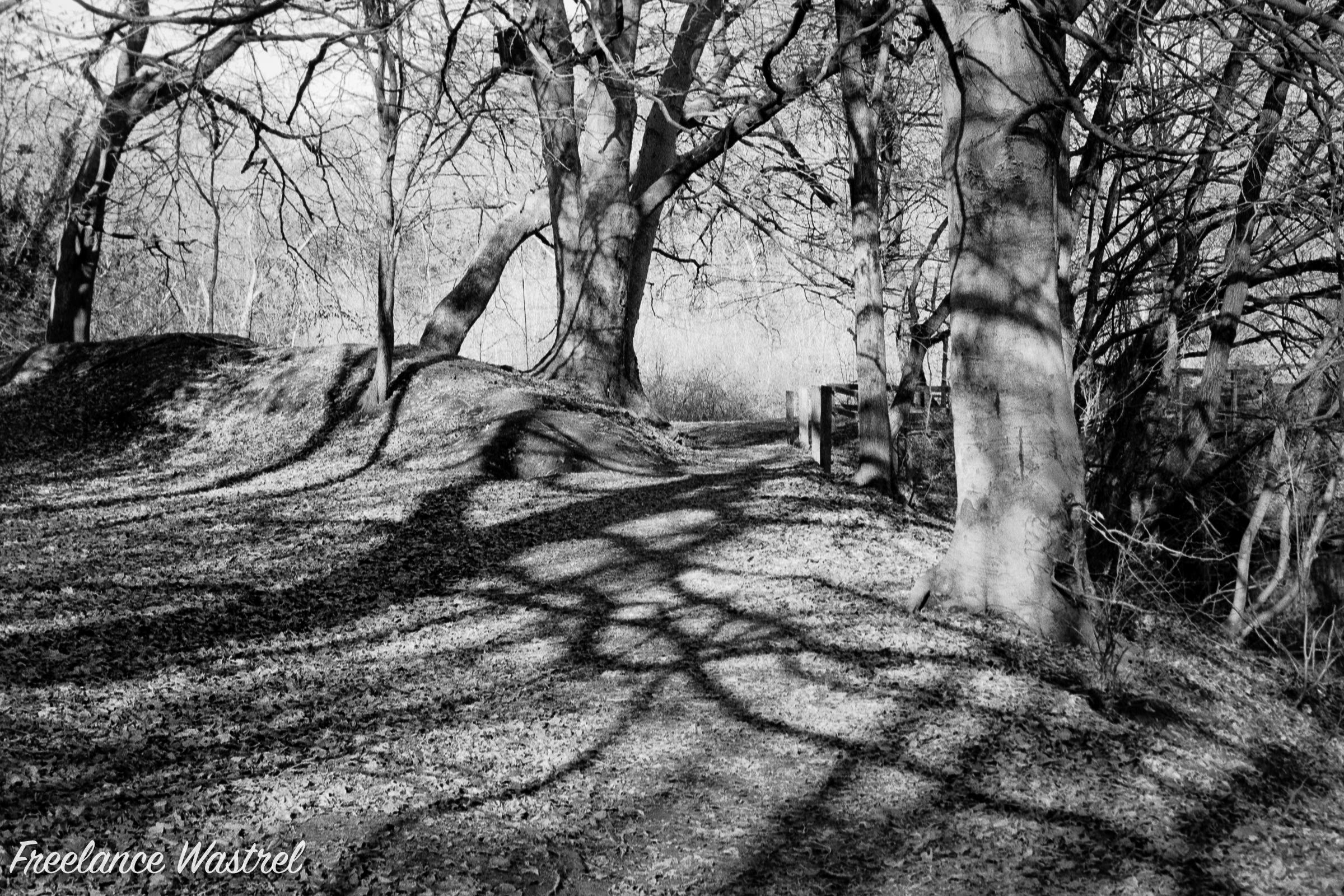 Shadows, Pennytown Ponds