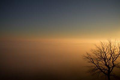 A sea of fog.