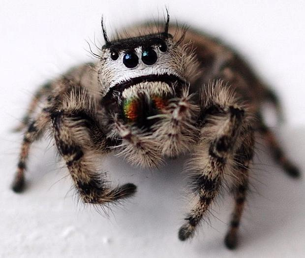 Who Knew Cute Spiders Exist