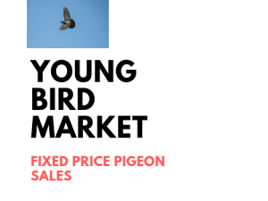 Young Bird marketplace