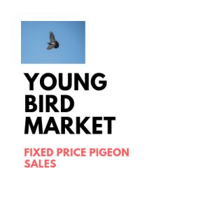 Young Bird marketplace