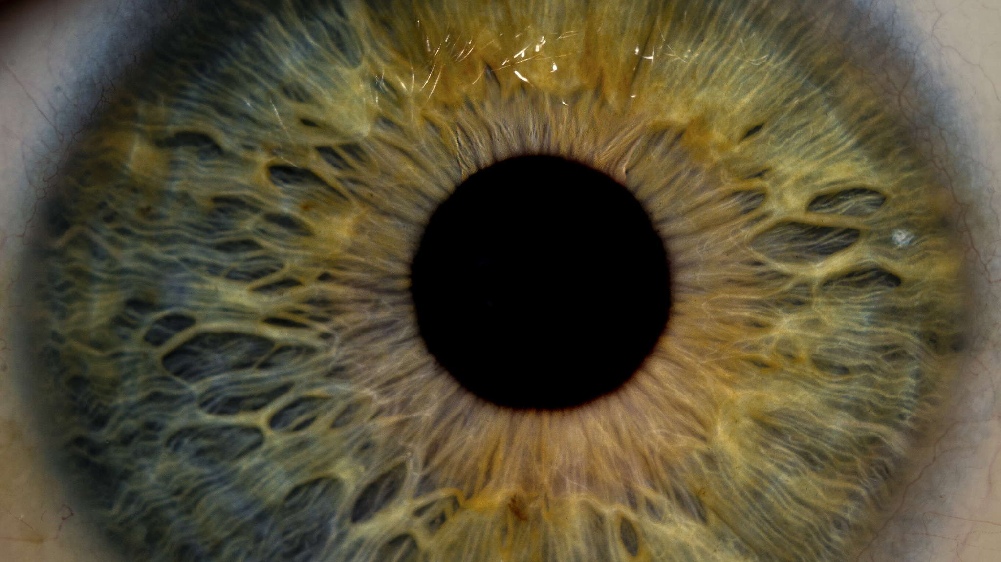 You Can Dilate Your Pupils Just By Thinking