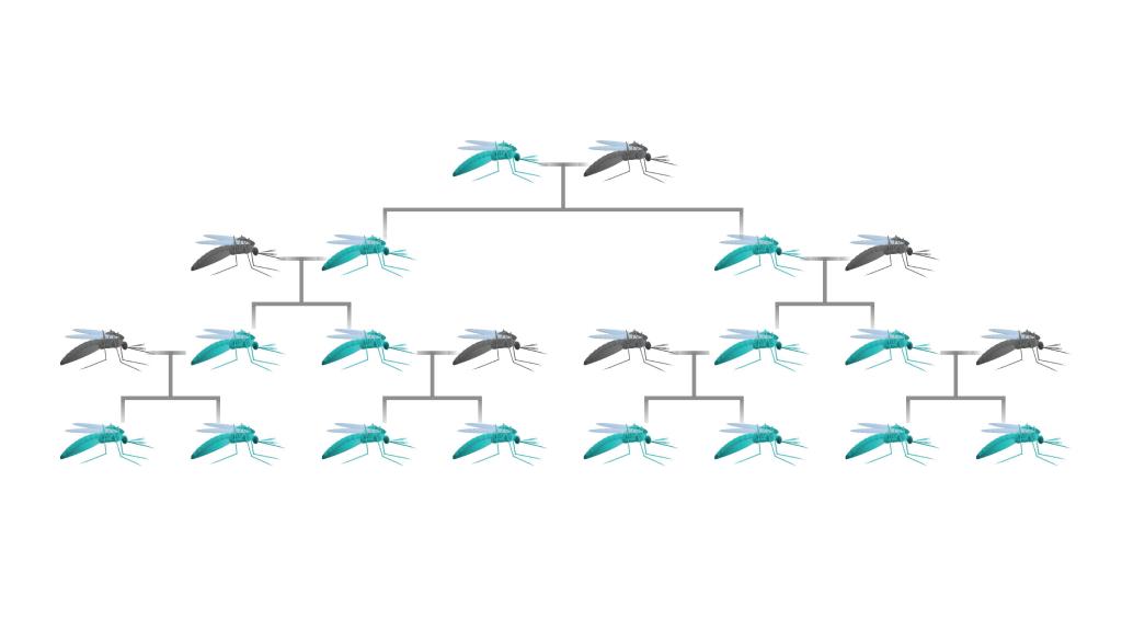 gene-drive-family-tree
