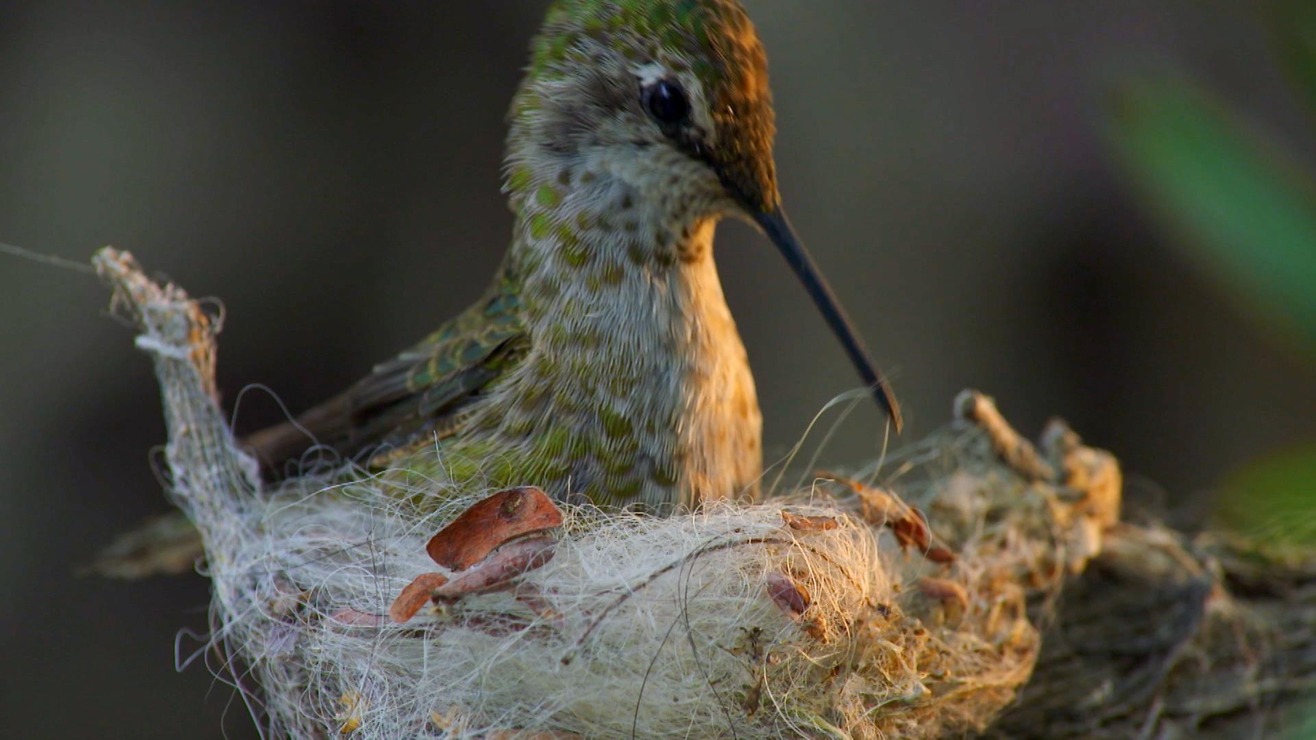 Animal Homes The Nest