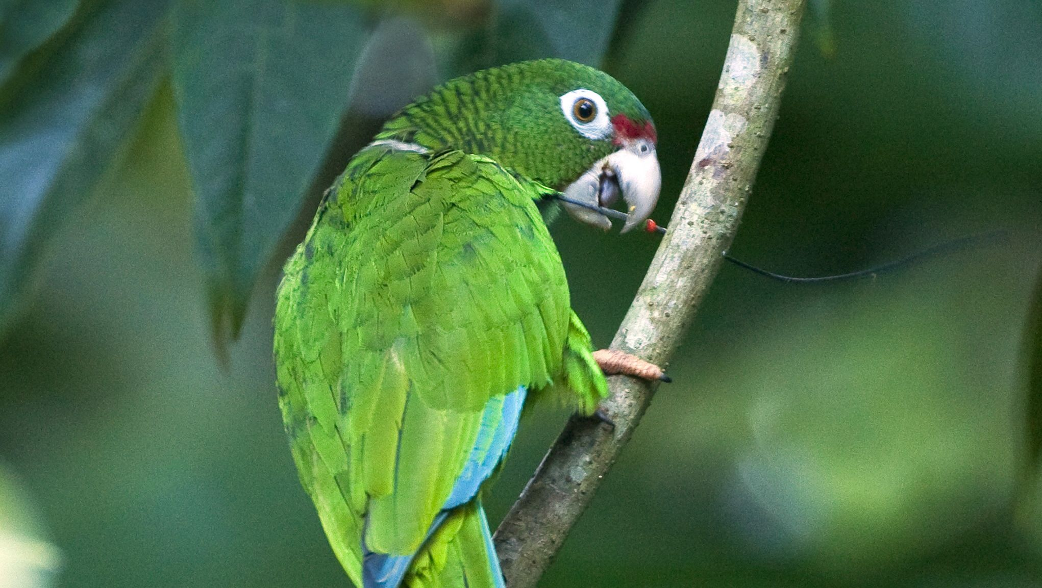 Wildlife Featured In Viva Puerto Rico Weathers Hurricane