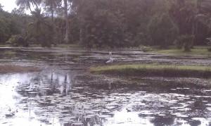 amazing swampy-ness :)