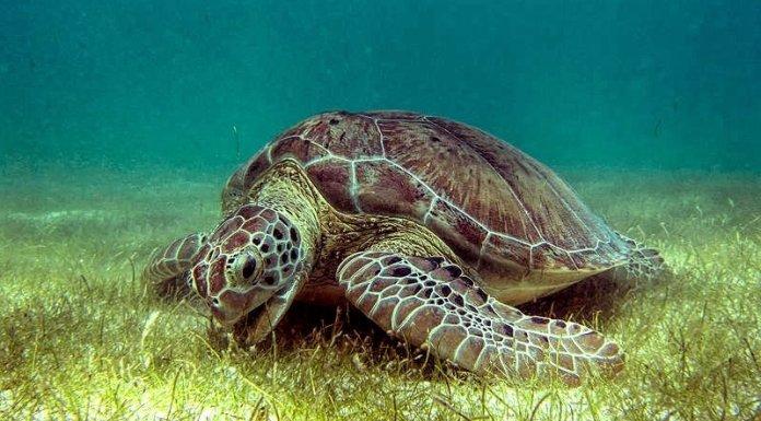 World's oldest sea turtle fossil