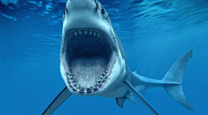 300 million years old 'Super Shark' braincase fossils