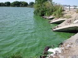 Lake Crystal blue-green algae bloom, September 9th, 2004