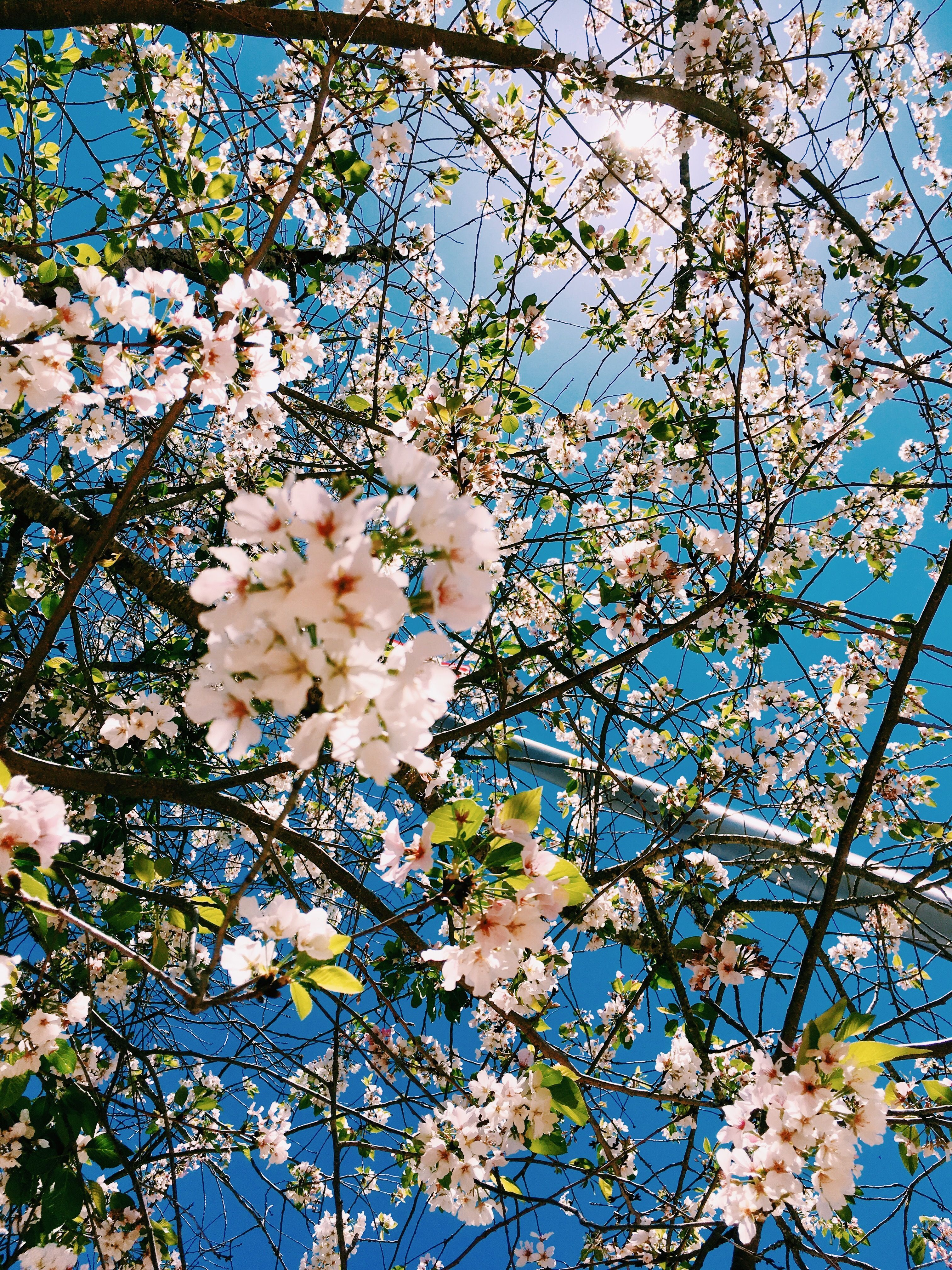 We have a lot of different topics like nature, abstract and a lot more. Aesthetic Spring Flowers Wallpapers | HD Background Images ...