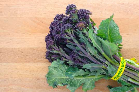 Purple Sprouting Broccoli 20370 18 ct USDA Certified Organic