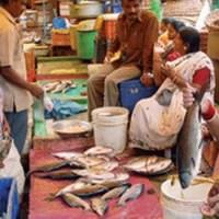 buy fresh fish online